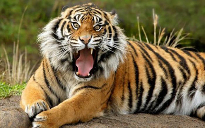 女游客野生动物园下车被老虎咬这事