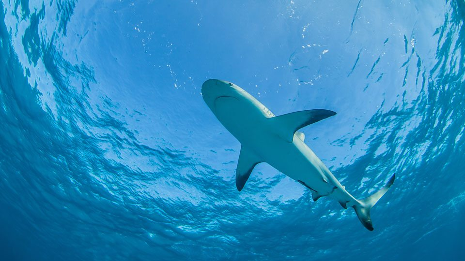 壁纸 动物 海洋动物 桌面 960_540