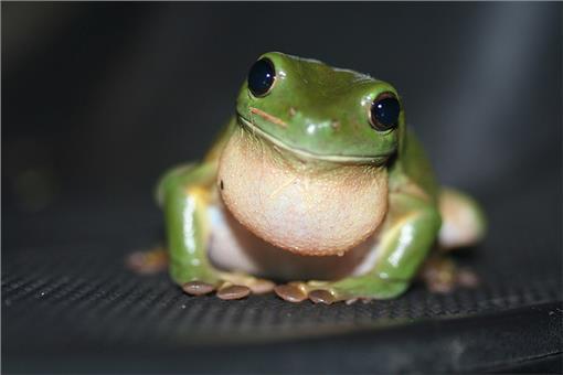 小学生英语故事:抓青蛙