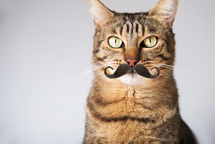 壁纸 动物 猫 猫咪 小猫 桌面 700_467