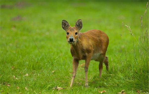 大自然版神奇动物在哪里:你们真不是p的吗