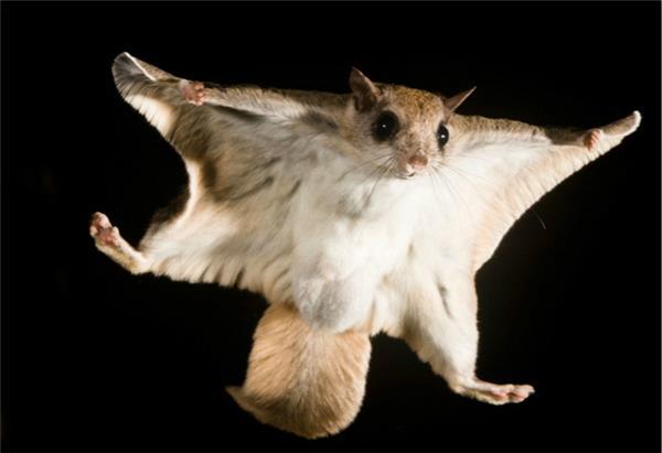 英文字母_大自然版神奇动物在哪里:你们真不是p的吗