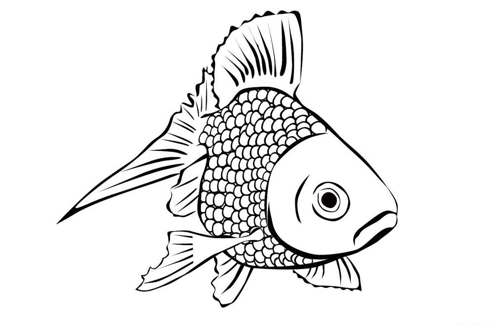 创意手绘鱼 下雨