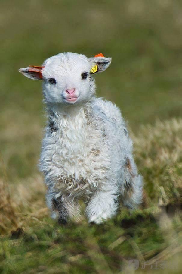 一起来看看可爱的动物幼崽图吧,保证开拓眼界,莫名戳中笑点,边看边笑