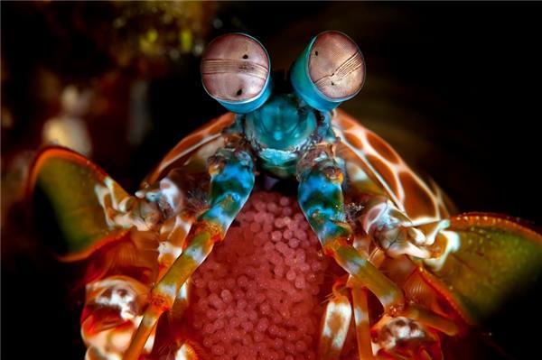 寻找大自然的真61神奇动物 惊喜一点不比电影少