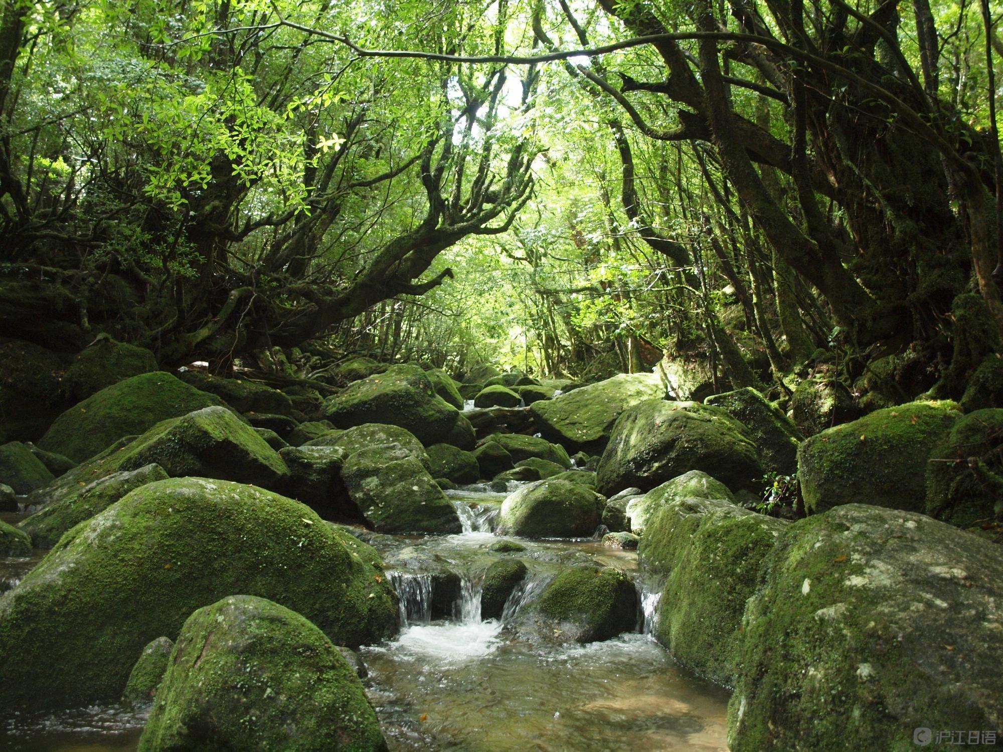 日本三星级旅游胜地推荐:屋久岛