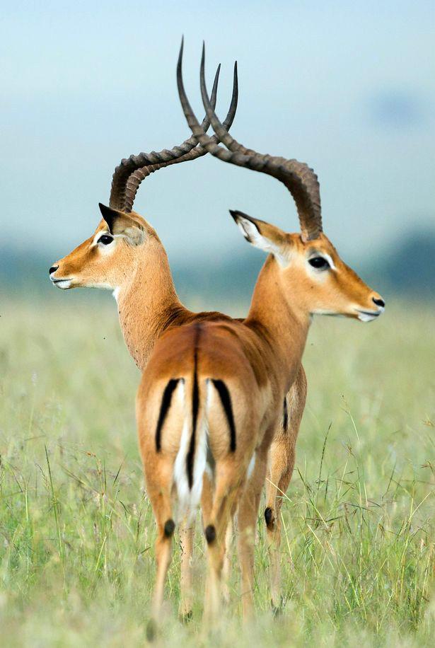 神奇的角度搞怪的照片:2016最棒动物抓拍