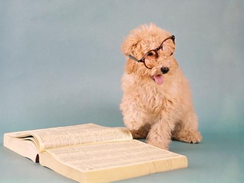 英语四级六级成绩查询提醒:准考证号忘了怎么办?