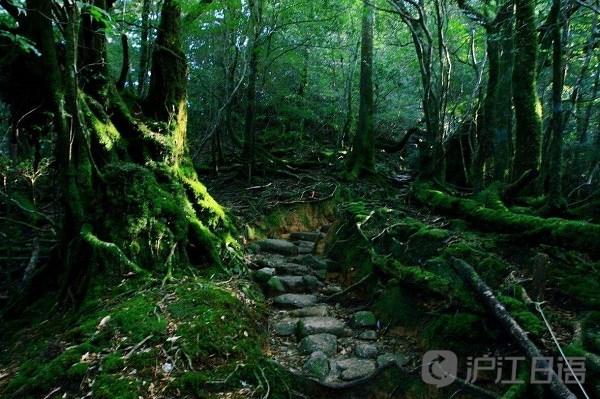 日本旅游胜地:屋久岛和白神山地