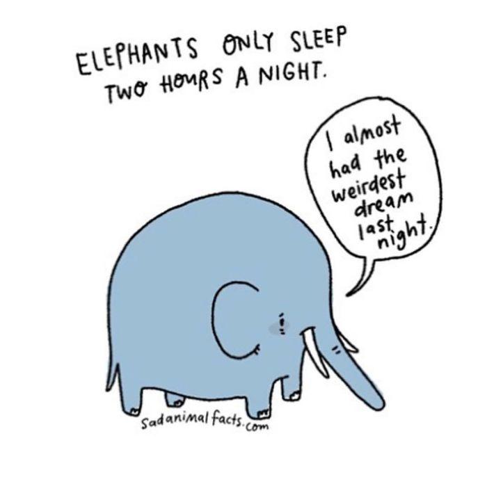 24个关于动物的冷知识,这插画笑死我了哈哈