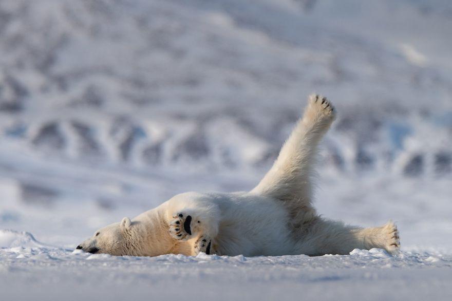 只要拍出了风趣的照片,任何人都可以参与这个奖项的竞选。据这一奖项的发起人Tom称,拍摄野生动物的摄影师属于动物摄影师这一类别, 其中有30%的专业摄影师和70%的业余摄影师。这一奖项的筹办者想要宣扬的理念是动物保护。围绕着最风趣野生动物摄影奖,我们有一个坚定的信念,那就是,最微小的举动,也能为动物保护的事业添砖加瓦。Tom解释说。
