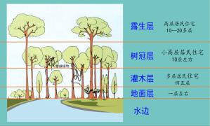 第二课:集体大课《热带雨林》关键内容+问答专帖