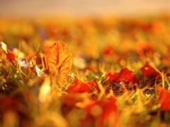 我们的《秋》