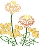 像花儿一样