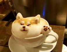 ★2017-04-23★【每日治愈】——萌哭了的咖啡拉花