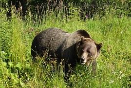 单词 bear 熊🐻 的记忆方法分享