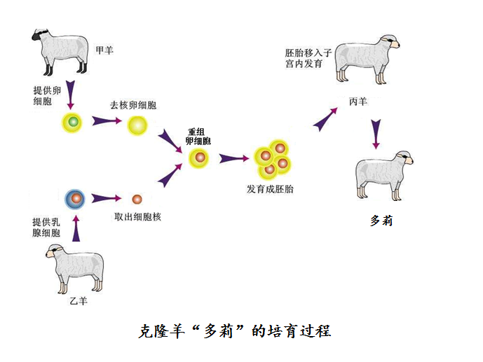 利用电子克隆技术获得基因