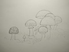 【17年4月新手村】蘑菇:美丽的毒蘑菇-草稿
