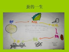 【养蚕日记】万红小学三2班伍家民