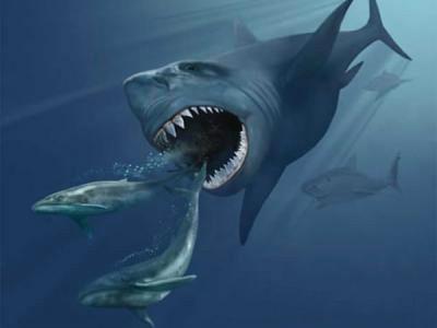 大千世界 动物世界` > 帖子      龙王鲸是一种巨型鲸鱼意味着需要