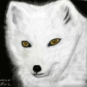 【2016年11,12月合作区】极地动物——北极狐
