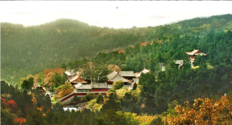 葶苈子自然博物学校