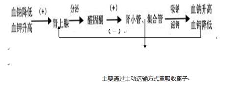 【生物文字分享】水平衡调节