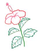 木槿花开淡淡,请你欣赏。
