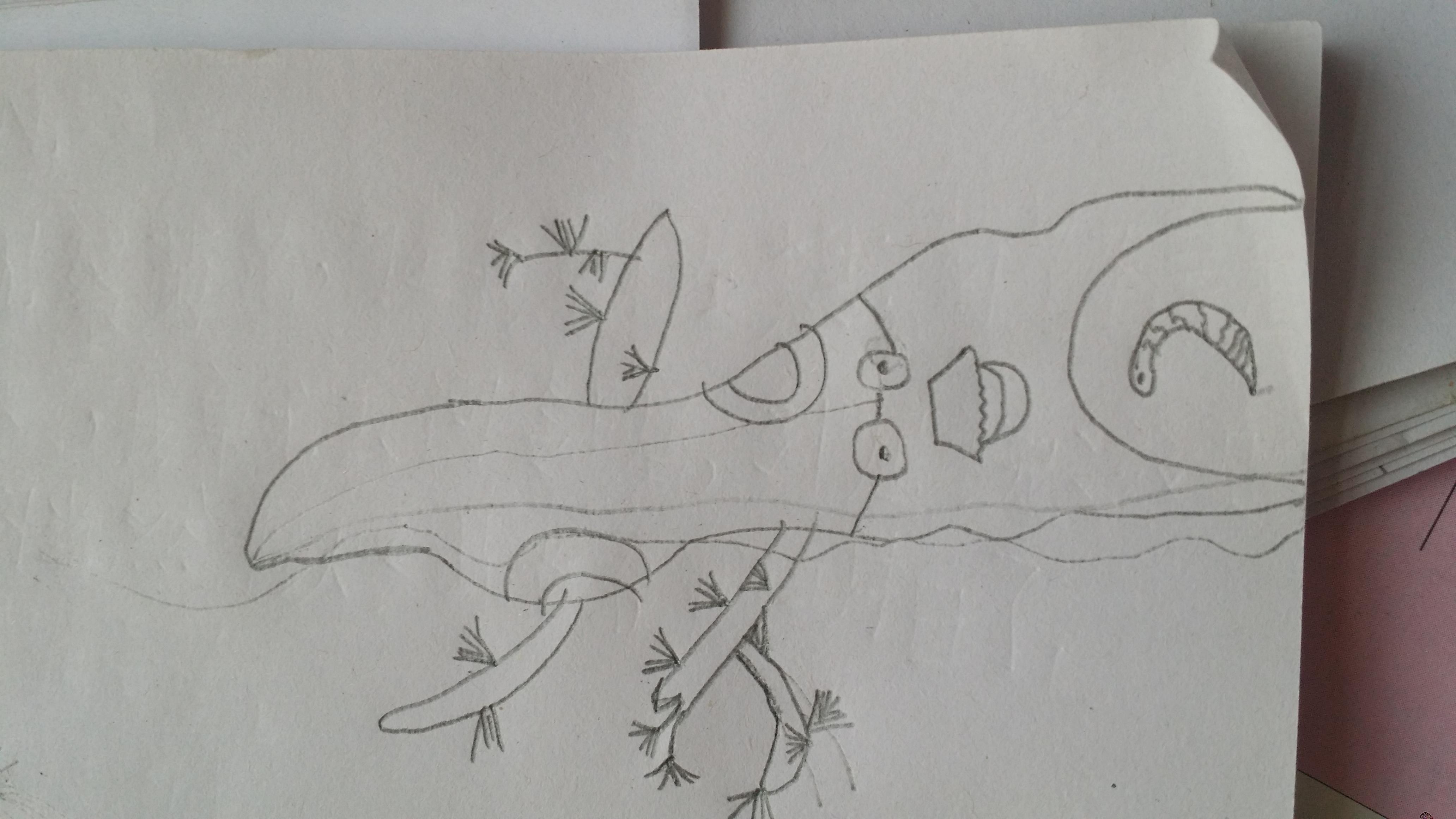 怎么画树简笔步骤图