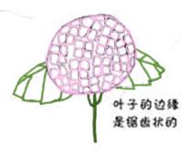 很漂亮的绣球花,请你欣赏。