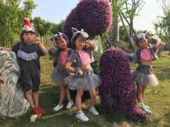 清英第七届童话节一年级汇演——我最喜爱的童话剧评选