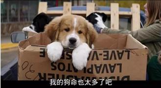 【国外影视推荐】——《一条狗的使命》
