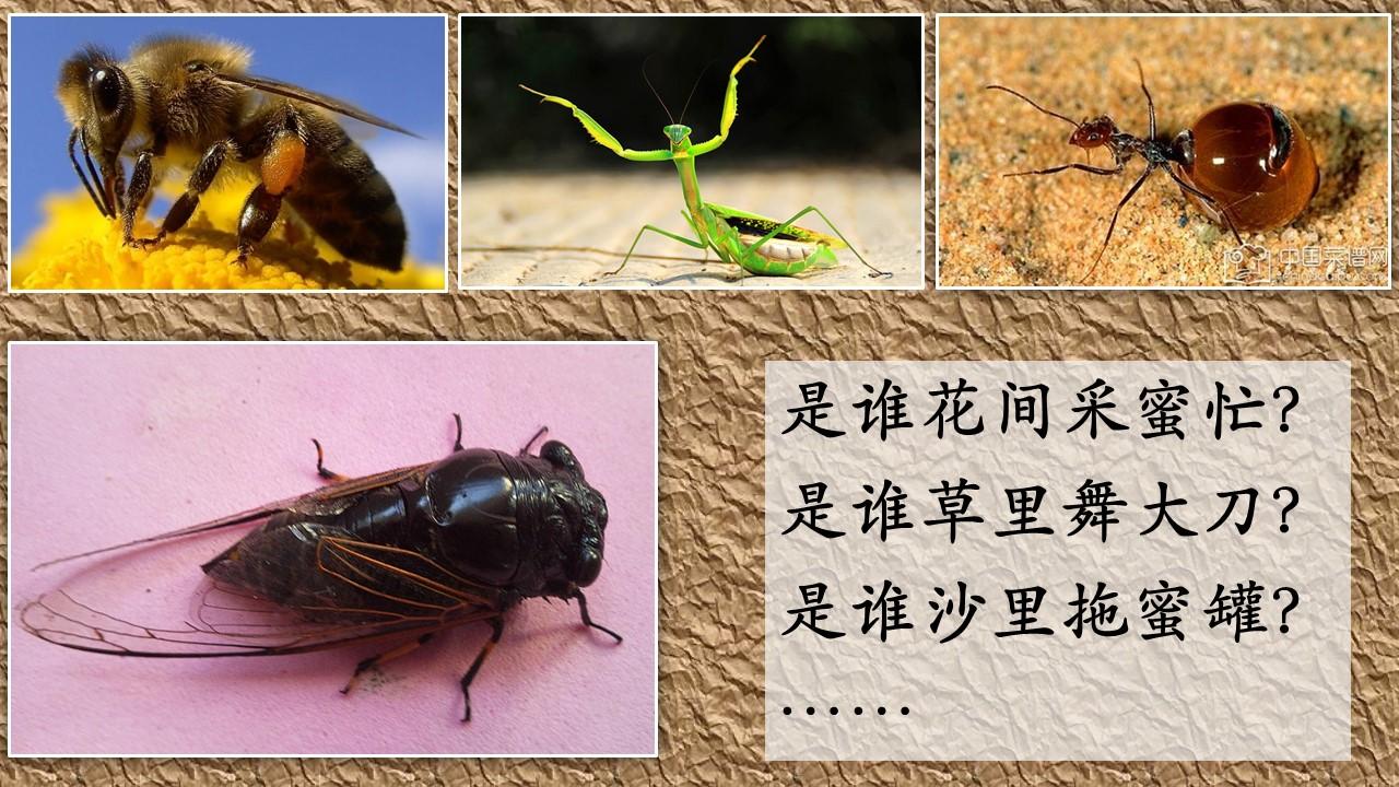 第四课:分科教学《动物儿歌·读写结合》关键内容 问答专帖