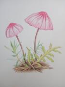 【2017年4月新手村】蘑菇
