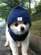 【日语+短文朗读】养宠物的话