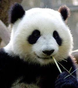 Животный мир в Китае 中国的动物世界
