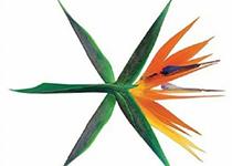 SM组合EXO
