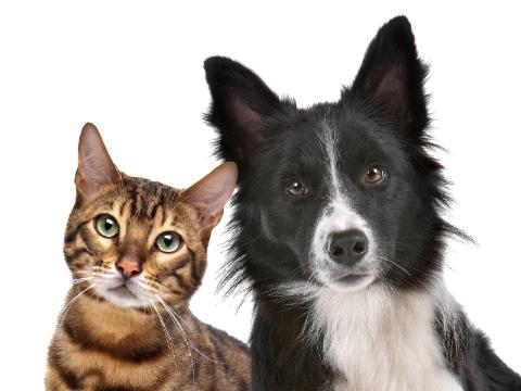 Quora精选:猫与狗有哪些区别?