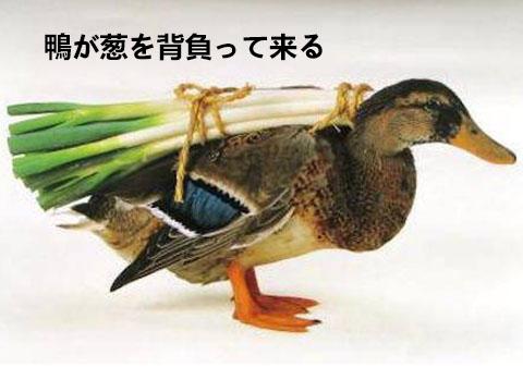 日语谚语:鴨が葱を背負って来る