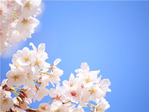 学日语的五大原因,你是哪一种?
