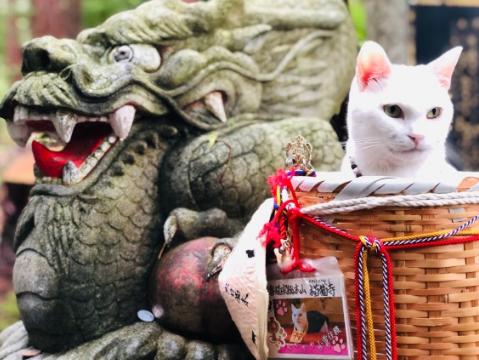 吸猫天堂:你知道京都有座猫猫寺吗?
