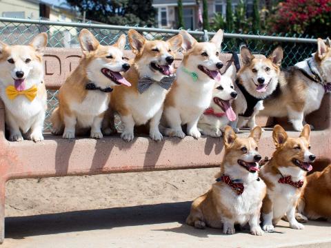 研究者声称:并非所有宠物狗都该绝育