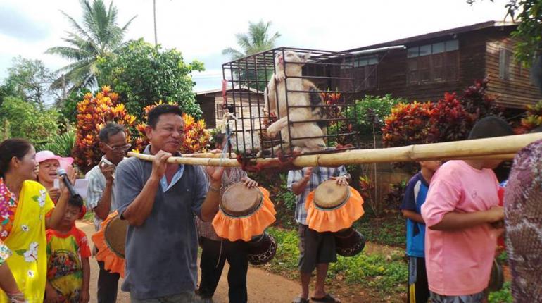 泰国传统风俗文化介绍:抬母猫求雨