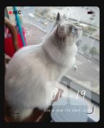 猫公馆_布偶ど