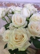 芬得拉玫瑰