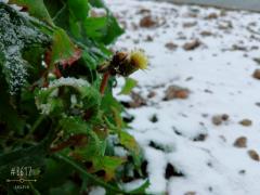 2017的第一场雪