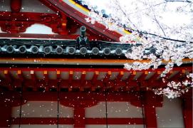 樱花季的日本旧时光